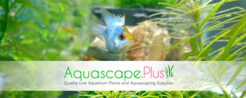 Aquascape Plus Store